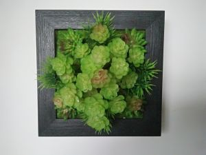 Hot Sale Decorative Wall Frame with Artificial Plants pictures & photos