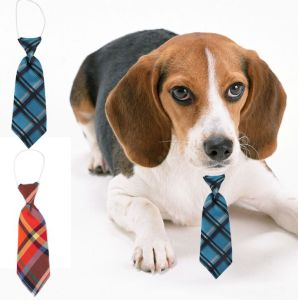 Silk Genterman Dog Tie pictures & photos