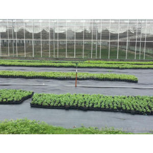 Plastic Woven Weed Control Fabric pictures & photos