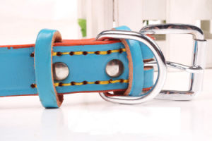 Pet Product Dog Cat Colorful Fashion Collar (C002) pictures & photos