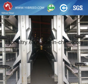 Wire Mesh Automatic H Type Broiler Cage pictures & photos