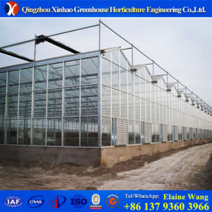 Promotion Manufaturer Directly Supply Venlo Glass Greenhouse with Hydroponic System pictures & photos