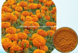 Eye Health Marigold Flower Extract Lutein 5%~80% pictures & photos