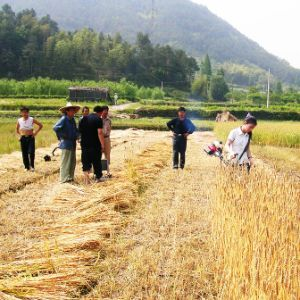 Rice Reper (ATJ-BC411C)