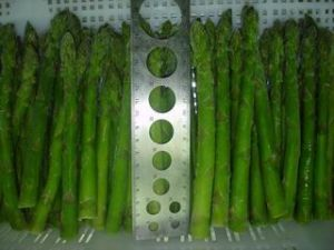 IQF Asparagus