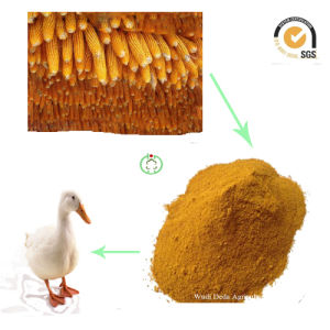 Corn Gluten Meal Min 60% Protein pictures & photos