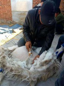 Animal Groomer Pet Clipper Fitting All Cat Dog Cattle Rabbit Sheep and Horse and All pictures & photos