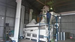 Wheat Seed Processing Plant pictures & photos