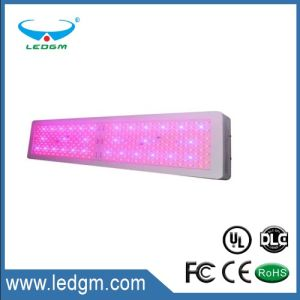 Full Spectrum LED Grow Light for Greenhouse and Indoor Plant Flowering Growing pictures & photos