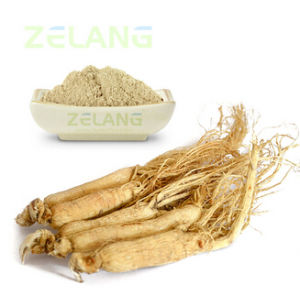 Panax Ginseng Root Extract pictures & photos