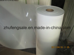 6021 Polyester Film /Mylar Film pictures & photos