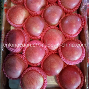 Red Fresh Qinguan Apple for India pictures & photos