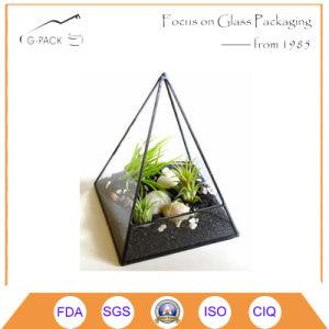 Air Plant Terrarium Glass Pyramid Terrarium Planter. pictures & photos