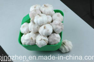2017 New Fresh Purple Garlic From Jinxiang China. pictures & photos