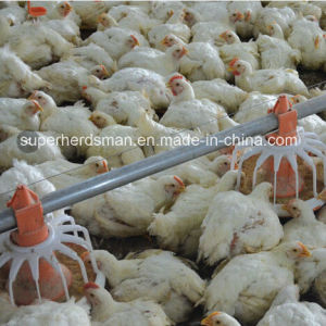 Good Quality Poultry Feeding Equipment Pan Feeder pictures & photos