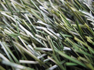 Football Grass-Olive Type