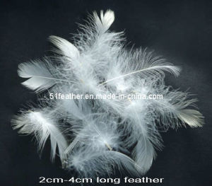 2-4cm White Duck Feather pictures & photos