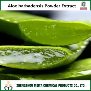 Top Quality Aloe Barbadensis Powder Extract with Aloin pictures & photos