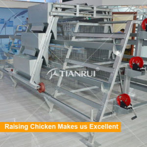 Tianrui H Frame Poultry Pullet Cage for baby chicken poultry farm pictures & photos