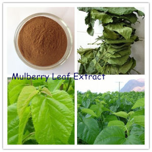 Factory Supply Anti-Diabetes Mulberry Leaf Extract 1% 1-Dnj pictures & photos
