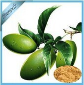 Anti-Diabetes, Anti-Oxidant Olive Leaf Extract Oleuropein pictures & photos