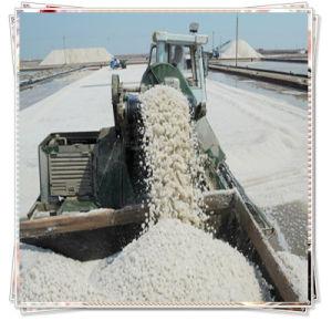 China Manufacturer Produce Sea Salt pictures & photos