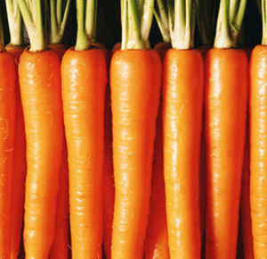 2016 Chinese Carrots Exporter pictures & photos