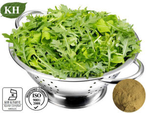 Supply High Quality 10: 1; 20: 1 Arugula Extract pictures & photos