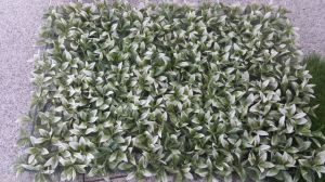 Artificial Plants and Flowers of Artificial Grass Gu20170226095833 pictures & photos