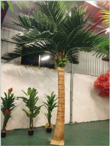 Artificial Plants and Flowers of Coco Palm 5m Gu-SL1105094131 pictures & photos