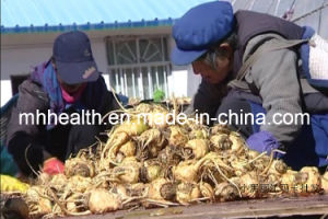Lijiang Farmy Supply Maca Extract Man Sex Enhancement pictures & photos