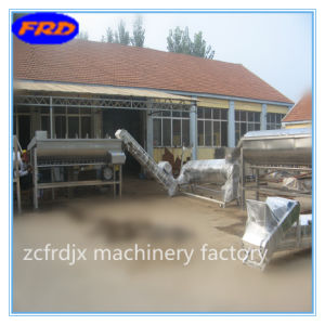 Poultry Abattoir and Frozen Chicken Feet Price! Sorting and Picking Machinery pictures & photos