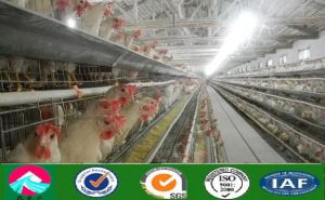 China Good Quality Prefab Chicken House Szm002 pictures & photos