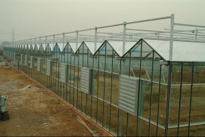 Environmental Commercial Plastic Greenhouse/ Multi-Span Greenhouse/ pictures & photos