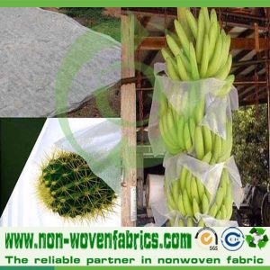 UV Retardant PP Spunbond Nonwoven Banana Bags pictures & photos