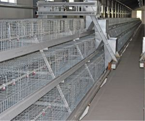 Broiler Chicken Cage with Wire Mesh and Good Quality & Price (A Type) pictures & photos