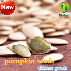 Shine Skin Pumpkin Seeds with Best Price and High Quality