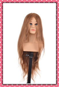 Hot Selling Human Hair Training Head 20inches for Beauty School pictures & photos