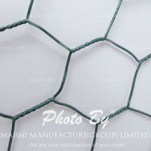 Bird Netting/ Chicken Net/ Hexagonal Wire Mesh pictures & photos