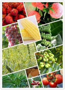 Agrichemical Plant Growth Regulator Uniconazole 95%Tc pictures & photos