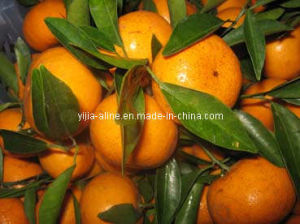 Mandarin Orange (2)