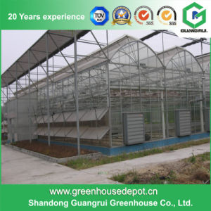 Agriculture Stainless Steel/ Aluminum Profile PC Sheet Greenhouse for Flower and Vegetable pictures & photos