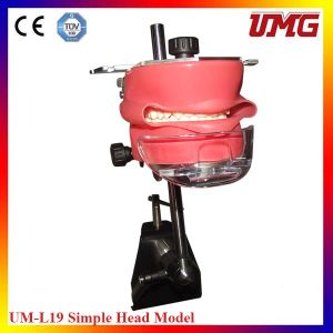 Best Selling Simple Head Model Dental Teeth Model for Dentistry Students pictures & photos