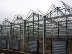 Factory Direc Sales Vegetable Growing Intelligent Glass Greenhouse pictures & photos