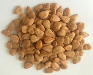Almond, Blanched Almond, Roasted Almond, Sweet Almond, Bitter Alond pictures & photos