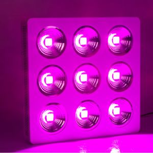 High Power Full Spectrum COB 900W LED Grow Light COB Chip for Commercial Cultivation pictures & photos