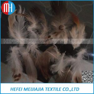 2-4cm Grey Goose Feather pictures & photos