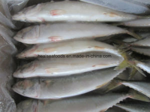 Chinese Blue Fresh Mackerel Fish for Sell pictures & photos