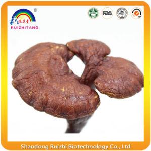 Reishi Mushroom Spore Oil Soft Capsules pictures & photos