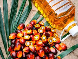Malaysia Refined Rbd Olein Palm Oil Cp8 Specifications pictures & photos